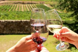 Tasting organic wine in the Penedes Wine Tour I Barcelona Slow Travel