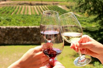 Tasting organic wine in the Penedes Wine Tour