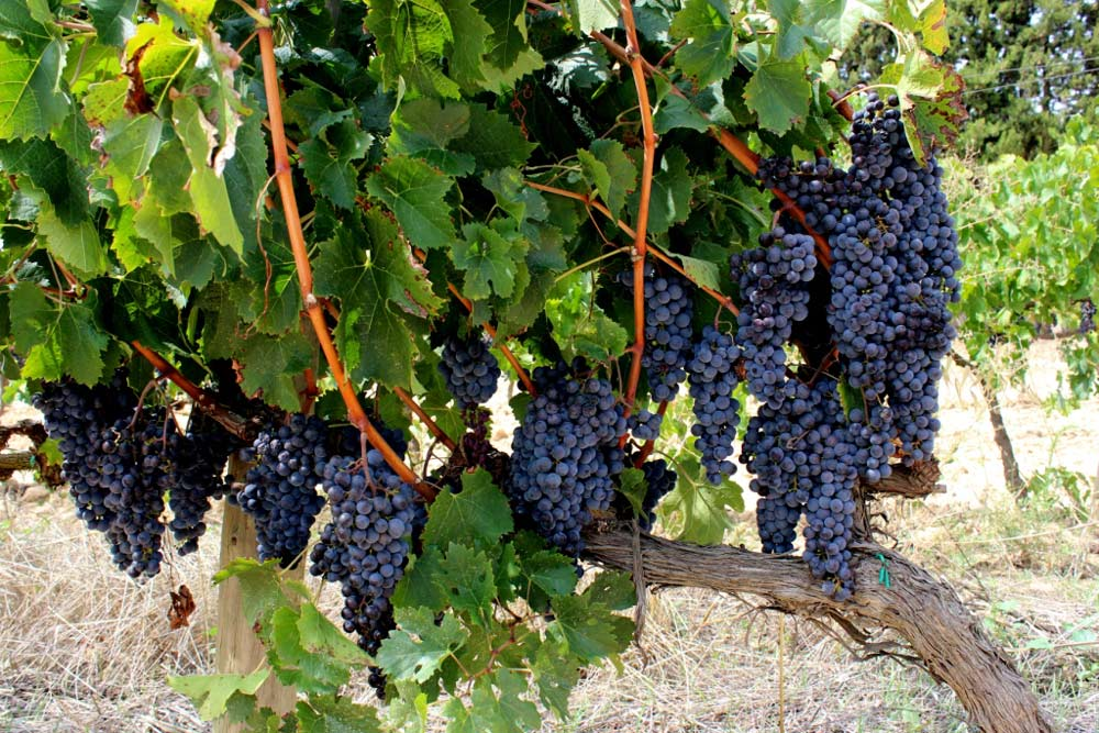 Penedes Wine Tour I Barcelona Slow Travel