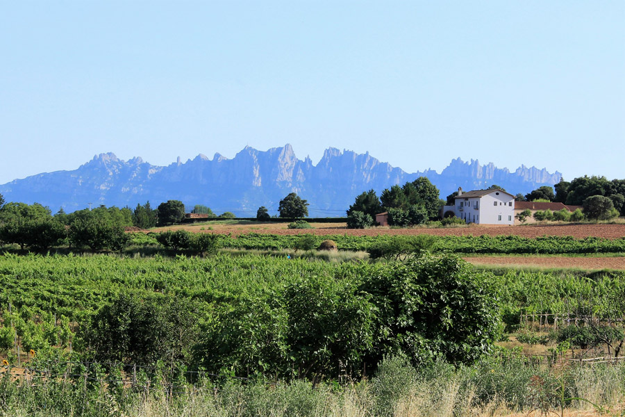Beyond Montserrat Tour: Wine, Cheese and Olive Oil Experience